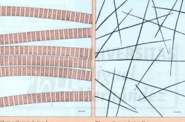Colageno tipo 2 - Puro Omega
