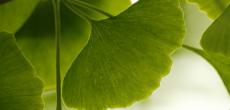 DHA EPA Ginkgo y CoQ10