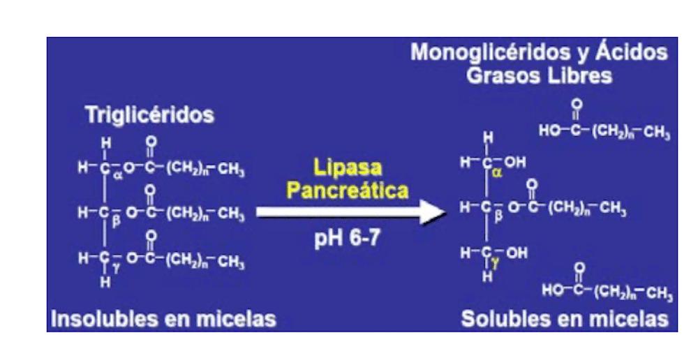 triacilglicéridos y éteres etílicos en los Omega-3