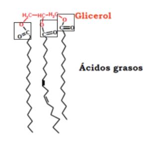 monoacilglicerol